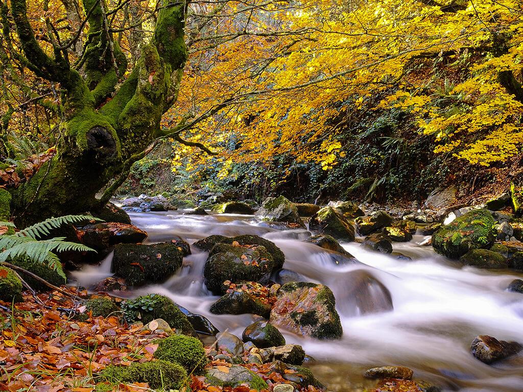 Parque Natural de Redes - naturaleza de Asturias