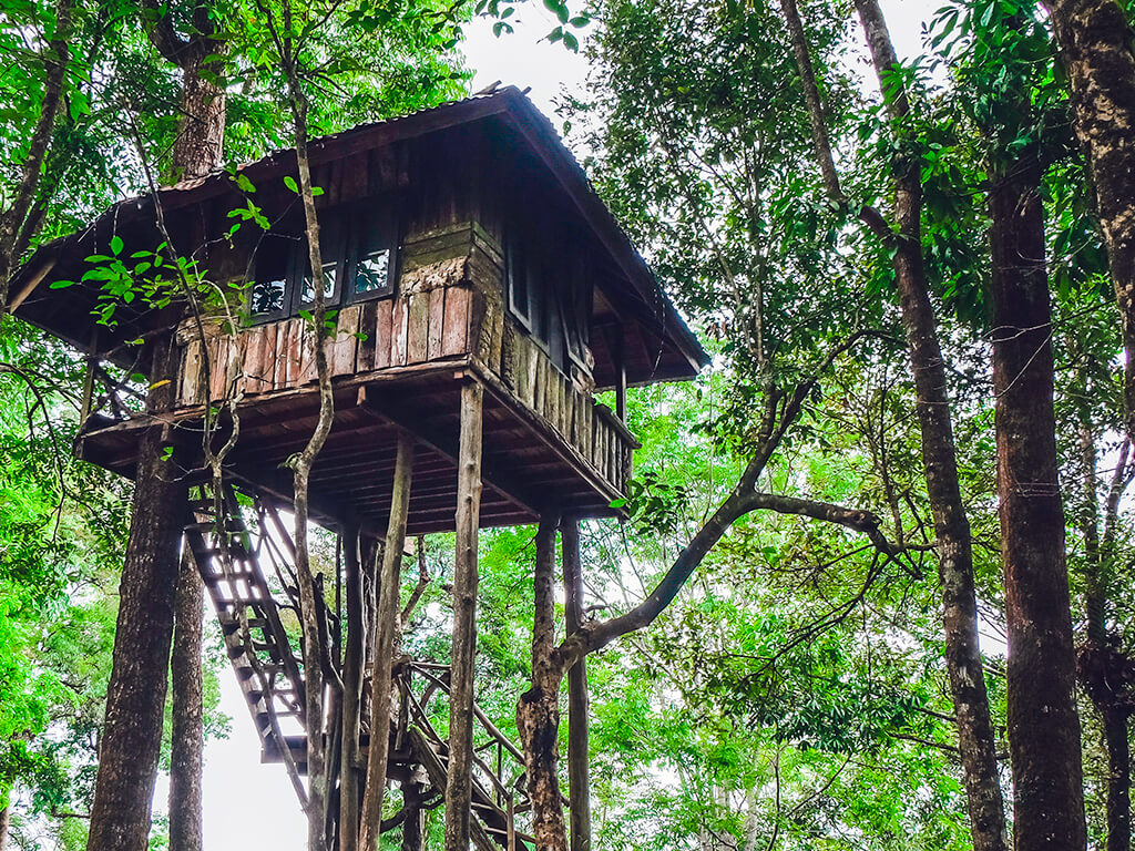 Alojamiento en cabaña de árbol - Hoteles en cabañas de árbol