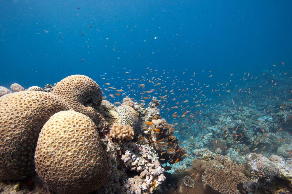Hoteles bajo el mar durmiendo como una sirena viajes y for Hoteles mas lujosos del mundo bajo el mar