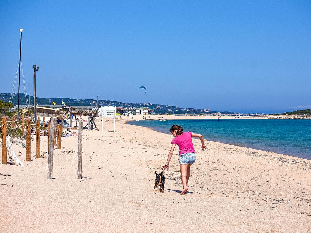 Hoteles de playa que admiten perros en España
