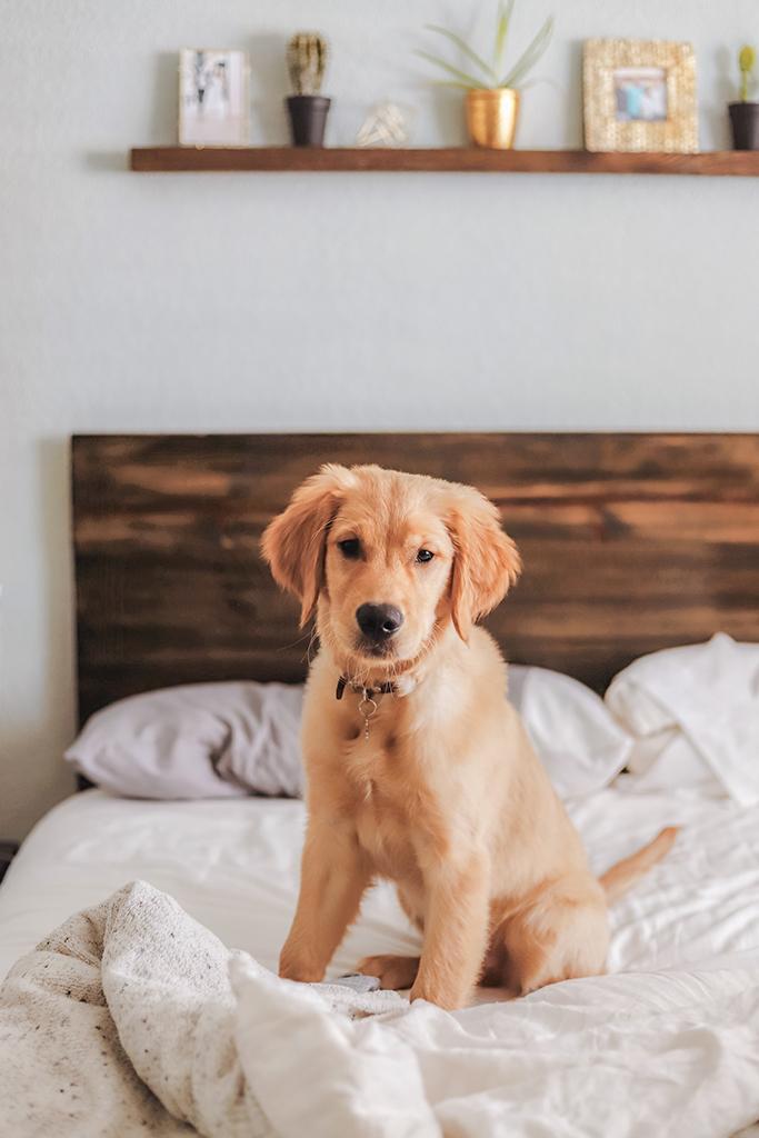 Hoteles que admiten perros en España