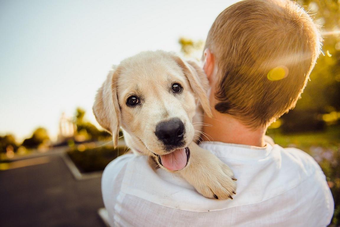 cuidado general del perro hombro