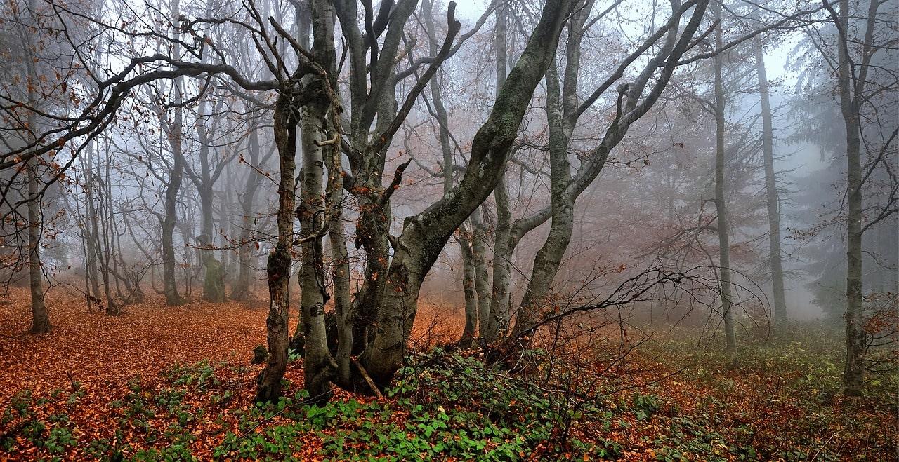 Bosque junto a las casas rurales cerca de Madrid