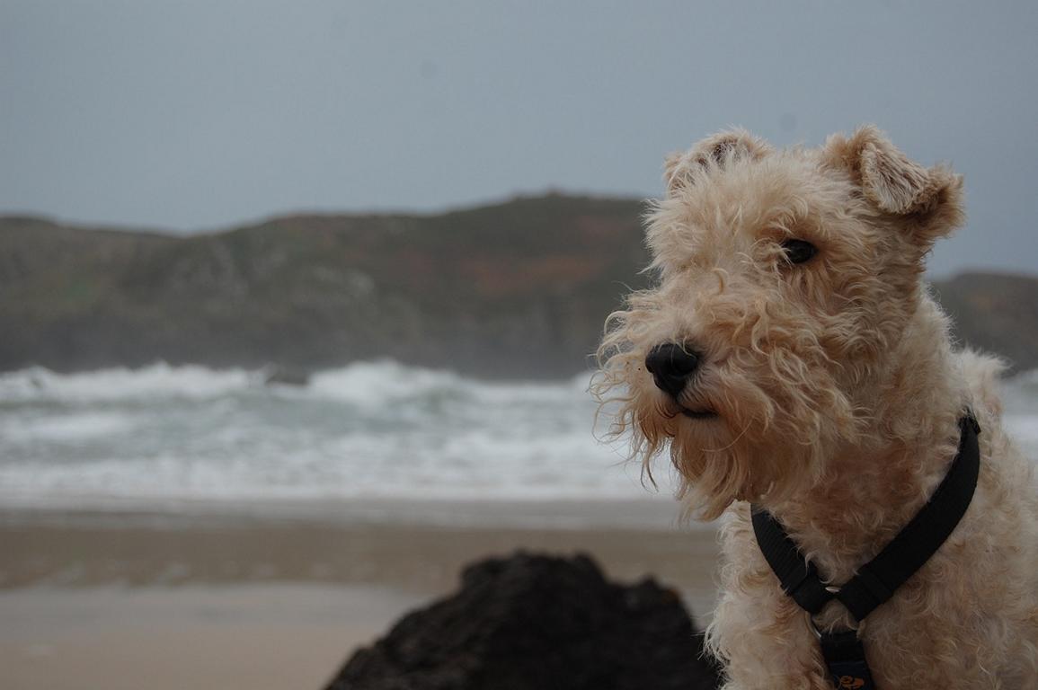 Playas para ir con perros, Playas de Asturias